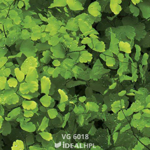 VG 6018